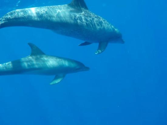 PDL Dolphin Safari