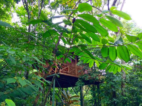 Tree Houses Hotel Costa Rica: Evergreen Bliss hidden away high above trees...