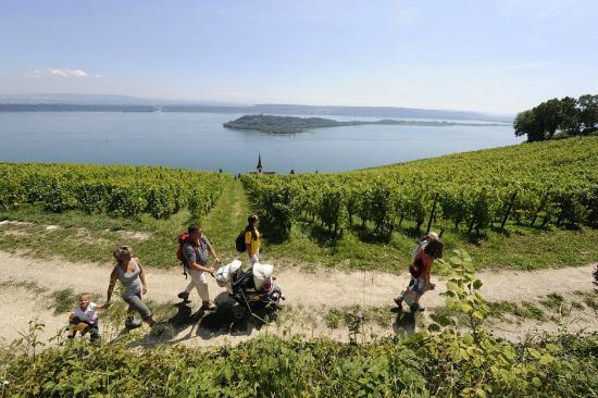 La Neuveville, Швейцария: Chemin des vignes