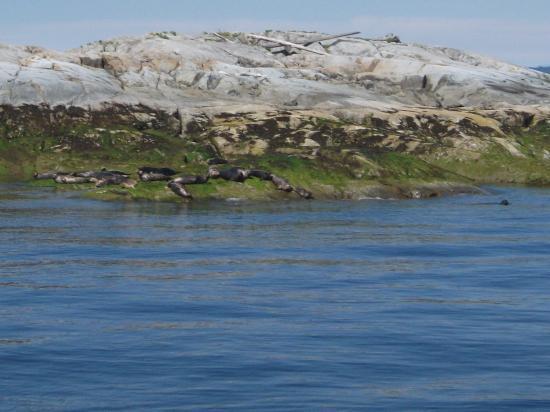 Pristine Charters: The seals