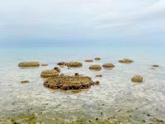 Kolonia, Ηνωμένες Πολιτείες της Μικρονησίας: アンツ岩礁