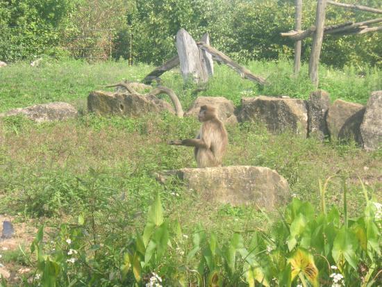 La Vallee des Singes: Vallée des singes