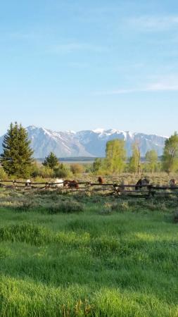 Moose Head Ranch: horses grazing in june