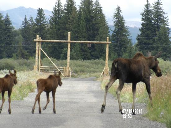 Moose Head Ranch: visitors on the ranch