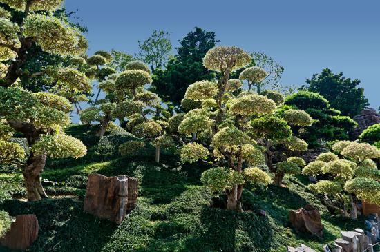 Nan lian garden hong kong fotograf a de jard n nah lian for Jardin hong kong
