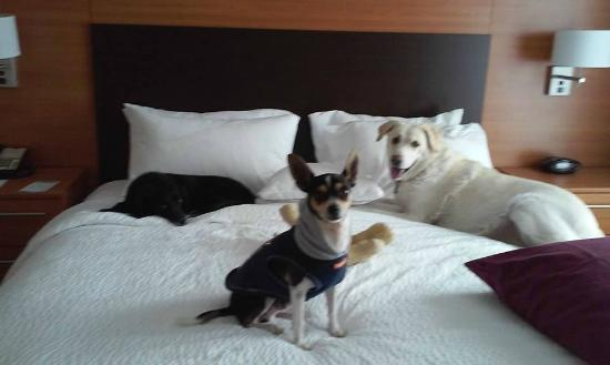 TownePlace Suites Lancaster: My pups giving the bed a thumbs up!