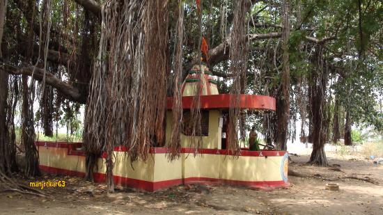 Raichur, India: 1000 years old Banyan tree, Kuravpur