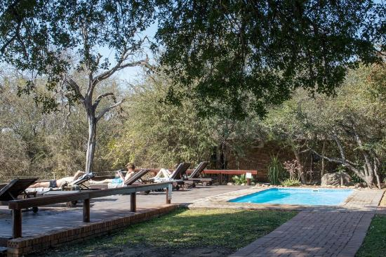Gomo Gomo Game Lodge: Poolside