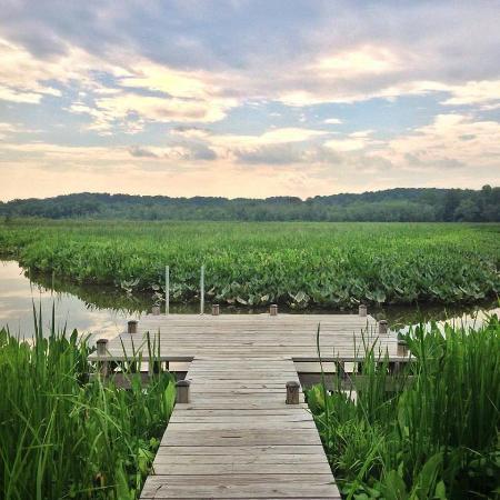 Lothian, Maryland: Chris Swarth Boardwalk at the Glendening Nature Preserve