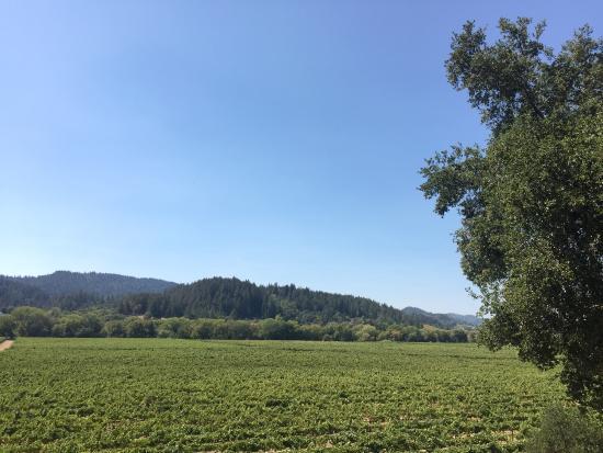 Wilson Winery: photo0.jpg