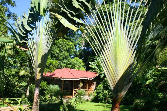 Hotel La Costa de Papito: Tropical Garden