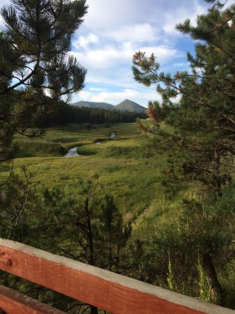 Black Hills Cabins and Motel at Quail's Crossing: Morning view from motel deck
