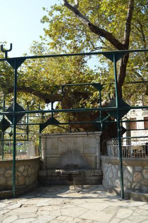 Hippocrates Tree: Hippokrates Baum
