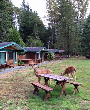 Stone Creek Lodge : Exterior of cabins...and the welcoming committee