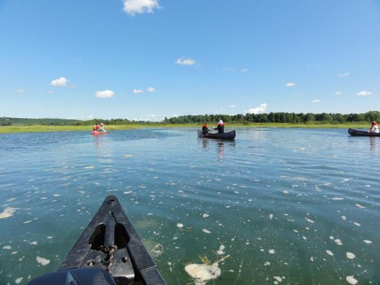 Scarborough Marsh Audubon Center : Canoe tour at Scarborough Marsh
