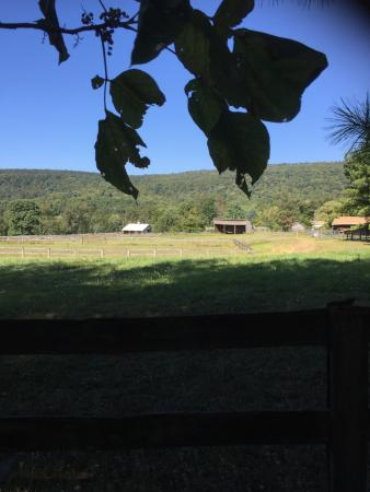 Round Hill, VA: Former Mystic Llama Farm