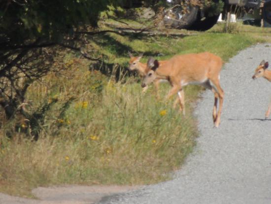Deer Island, Kanada: Une île qui porte bien son nom