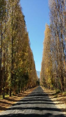 Photo of Termas El Corazon Los Andes