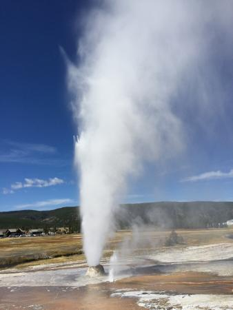 Wildlife Expeditions of Teton Science Schools - Day Tours: Beehive Geyser