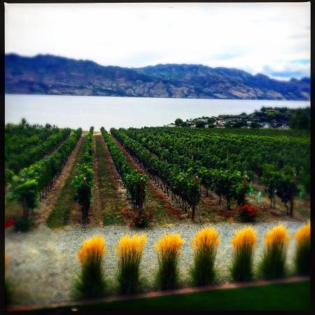 West Kelowna, Canadá: Picture of vineyard from the tasting room