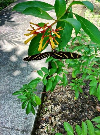 Florida Tech Botanical Garden : Enjoying a day with my husband.