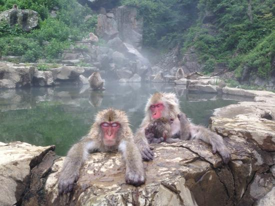 ‪Snow Monkey Resorts Tours‬