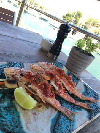 Quince Restaurante & Cantina : Salmonetes