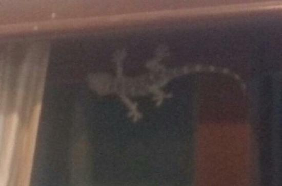 Chaweng Grand View Resort: Gecko in the room
