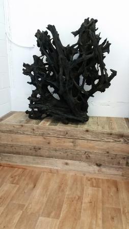 Claddagh Arts Centre: 7,000 year old bog oak root