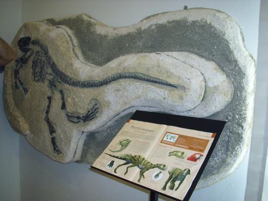 Parco e Museo Vulcanologico di San Venenzo: psittacosaurus