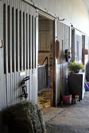 The Thoroughbred Center: barn