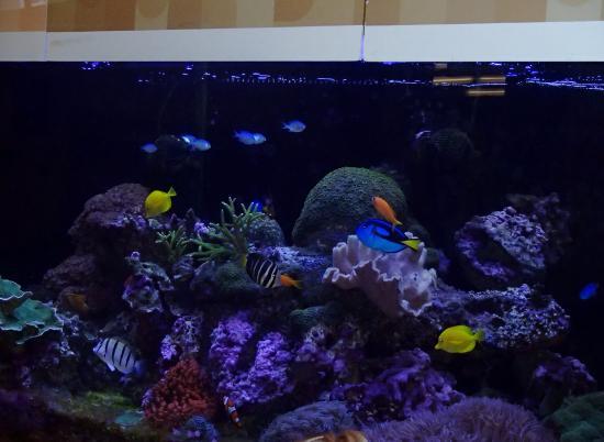 Saint Louis Science Center: Nemo Aquarium