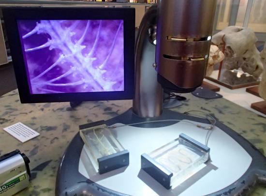 Saint Louis Science Center: Microscopes