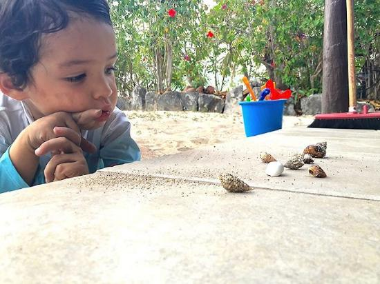 Navini Island Resort : Toddler Island life is collecting hermit crabs and waiting for them to come out!