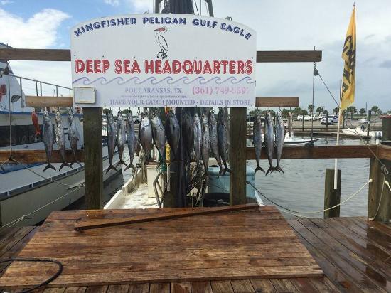 Fish 11 people caught on the 8 hour fishing trip for Port aransas deep sea fishing