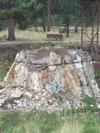 Florissant, CO: Petrified Red Wood
