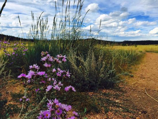 Florissant, CO: Flowers