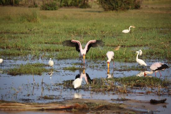 Jacana Tented Safari Camp: more birds
