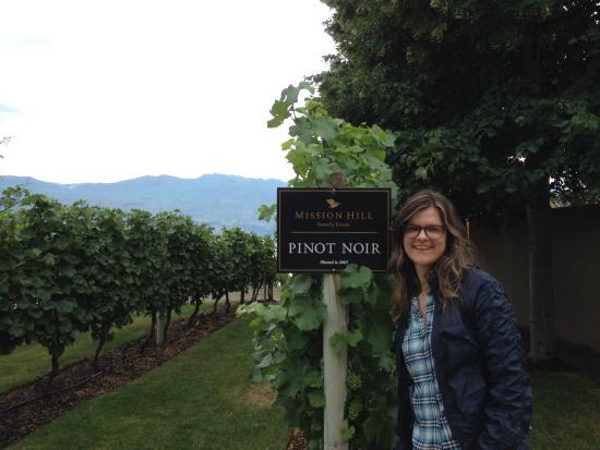 West Kelowna, Canada: Vines