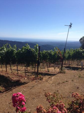 Loma Prieta Winery: Just the most spectacular view