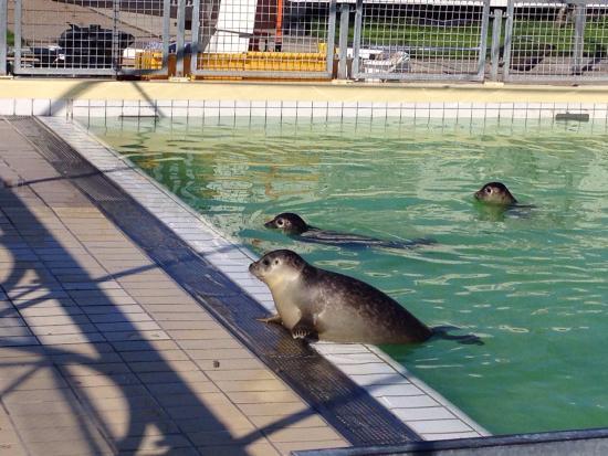 Zeehondencentrum Pieterburen: Alcuni scatti nel percorso di riabilitazione per foche