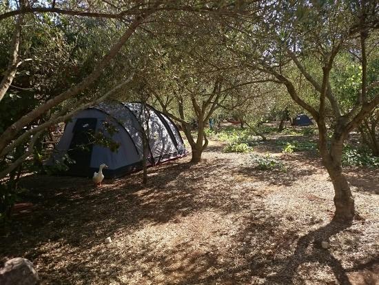Camp Skriveni