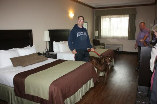 Best Western Plus Kamloops Hotel: Pet Friendly Room With New Hardwood Floors