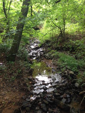 Fairfield Plantation Resort: Walk in the woods