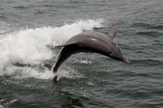 Thundercat Dolphin Watch: photo1.jpg