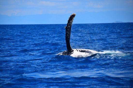 Mission Beach, Australia: Whale Ho!