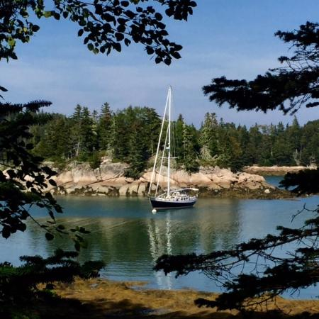 Stonington, ME: Peaking through the pines...
