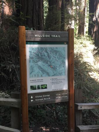 Tom S Tours Muir Woods