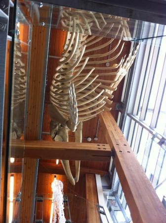 Bowser, Kanada: Whale skeleton