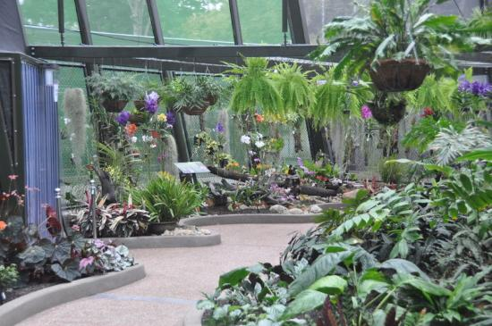 Cairns Botanic Gardens: A Wandering Path Takes You All Through The  Different Sections Of The